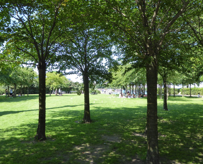 Small park with Japanese cherry trees at Langelinie, Copenhagen, Denmark