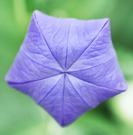 Fivefold symmetry 16