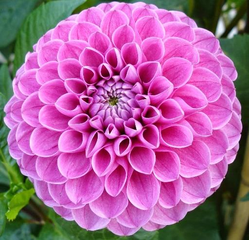 Rotational symmetry 20