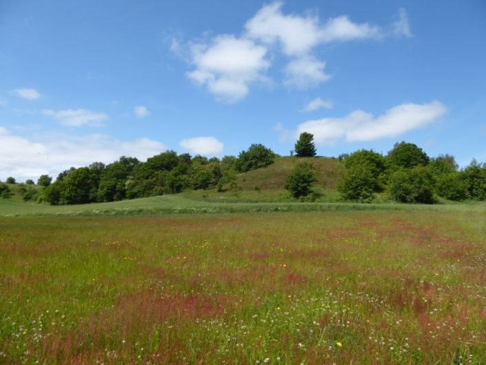 wild landscape in Jutland