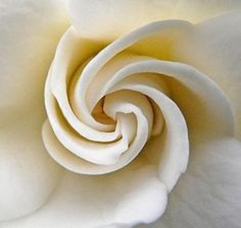 spiral 11