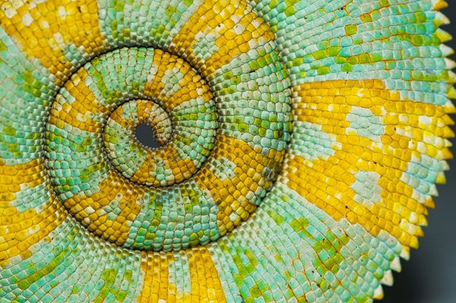 spiral 8