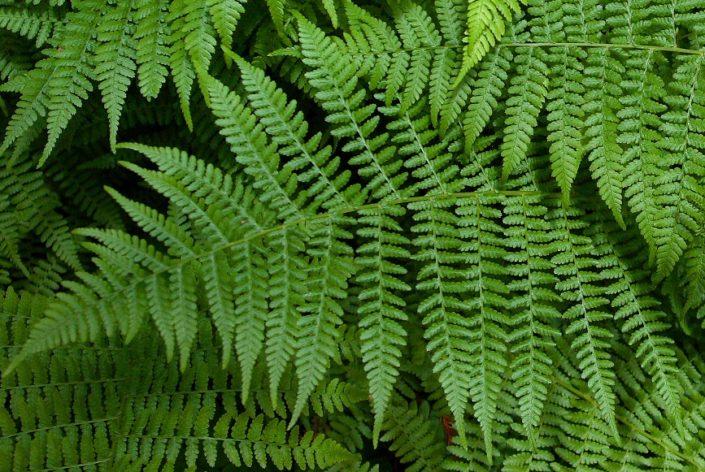 Natural Patterns ECstep Mesmerizing Nature Patterns